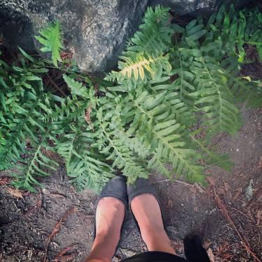 feet ferns