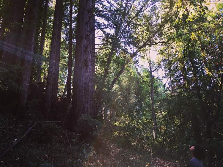 me and redwood