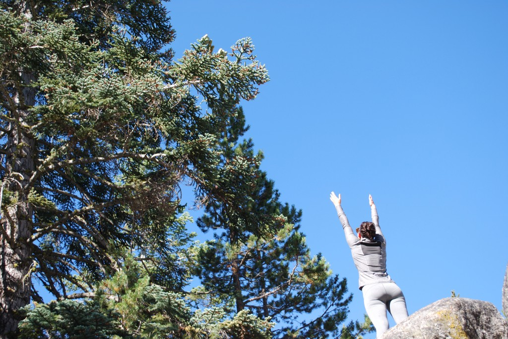 reach for spruce