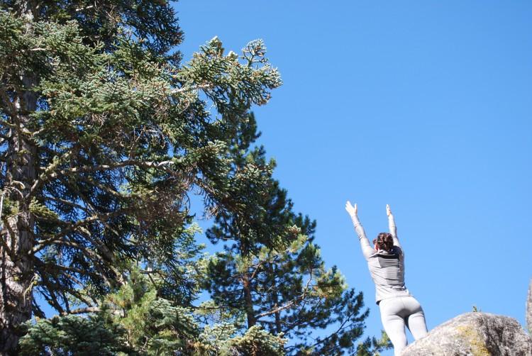 reach for spruce