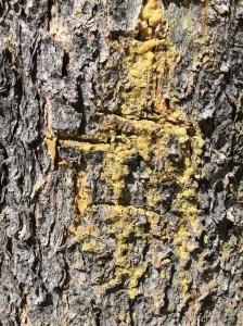 sad tree2