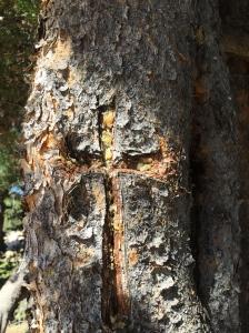 sad tree4