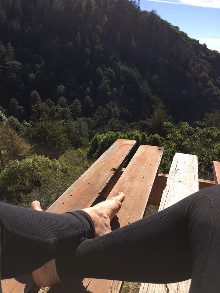 redwood legs